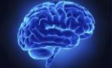 Nature子刊:記憶與大腦結構會受到免疫系統的影響?