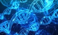 人类疱疹病毒基因组包装关键机制揭示