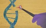 """""""魔剪""""剪切后,細胞如何修復?Nature子刊:沒那么簡單"""