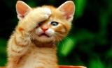 《Nature》:撸猫人士请注意!弓形虫还有三十秒入侵大脑!