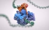 最新Nature封面:我们终于搞清了关键RNA的转录第一步