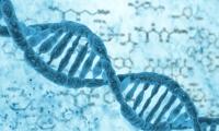 """解读百岁老人的遗传""""密码"""" ,寻找潜在的心血管疾病新疗法"""
