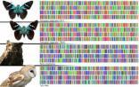 科技部:我国将构建近海生物DNA条形码数据库