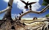 10年内消灭蚊子:一个小岛的梦想,能实现吗?