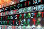 澳大利亚推出十万基因组计划,韩国推万人计划