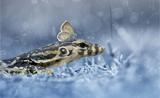 不寻常之美:捕捉神奇的微小动物瞬间