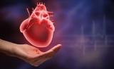 """英科学家培育""""心脏补丁"""" 患者有望告别心脏移植"""