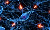 Nature:移植胚胎神经细胞可以整合到损伤的神经网