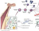 干细胞图片