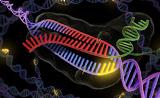 革命性基因编辑神器CRISPR成科学界新宠