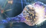 碳纳米管连接神经元,修复受损脊髓
