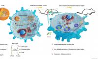 Nature子刊:操縱自然過程增強細胞抗菌性能,對抗晚期敗血癥