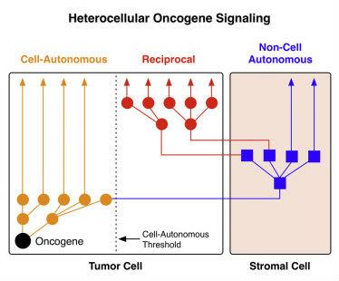 """Cell:癌细胞是如何""""诱骗""""健康细胞的?"""