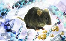 转基因/基因敲除小鼠技术进展与应用巡回讲座