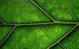 著名学者Nature Genetics揭示植物新干细胞通路