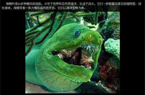 盘点十大恐怖恶魔鱼 看海底世界的恐怖面-图库-生物