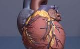 动起来!研究证明活动身体可以降低老年人患心脏病的风险