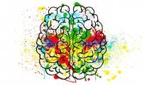 大脑衰老是否可逆取决于生长环境够不够软