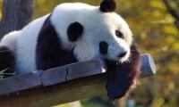 台下十年功,Paper一分钟!世界首例古大熊猫全基因组测序结果揭秘