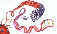北大邓大君教授解析癌症表观遗传学