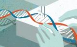 """再来1篇!发论文""""专业户""""CRISPR又登上了Science……"""