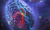 李劲松,于翔Cell Res最新文章:CRISPR技术构建基因功能分析方法