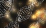 PNAS:新方法有望消除杜氏肌营养不良症小鼠对基因治疗的免疫反应