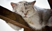 你睡觉时,大脑竟然在努力加深记忆!