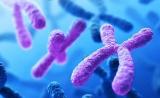 Science子刊:NIPT有必要对24条染色体都开展筛查
