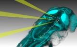 Neuron:神经元活动如何产生行为?答案在极个别的神经元中