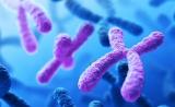 1篇重要的Cell论文,与延缓衰老、抗癌密切相关!