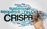 CRISPR和这三家初创生物技术公司,能消灭上万种疾病吗?