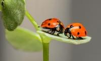 研究称昆虫正以惊人速度消失 对生态造成灾难性冲击