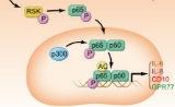中山大学1篇Cell:揭示特殊成纤维细胞亚群调控肿瘤干细胞新机制