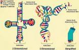 tRNA测序,约吗?