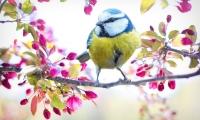 """鸟儿学唱揭秘""""听觉编码""""机制,类似过程可帮助人类学习言语"""