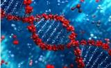 南开大学新突破:低毒小分子聚阳离子解决干细胞转染难题