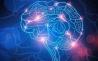 Nature:大脑GPS系统不仅仅是导航那么简单