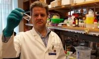Nature子刊:反毒为药!河豚毒素或许成为新一代精准局部麻醉剂