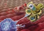 细胞,分子
