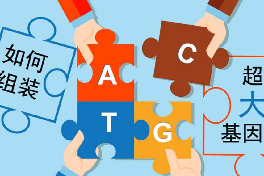 深入解析如何将超大基因组组装到染色体水平
