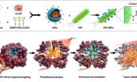 深圳先进院在纳米光敏剂工程化沙门氏菌治疗实体瘤领域获进展