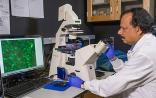 """Nat Mater:美科学家研发癌症""""单轨""""或变癌为普通疾病"""