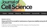 浙江大学教授JCS发现保障受精卵第一次DNA复制顺利完成的关键因子