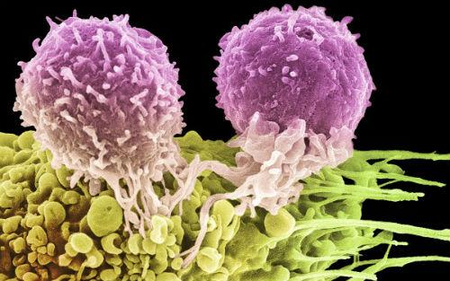 """被""""最快一年上市""""刷屏!癌症疫苗:迷雾终散去,芳容渐清晰?"""