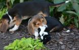 盘点 | 近期发生在动物身上的科学奇闻(试管狗、双肌型猪......)