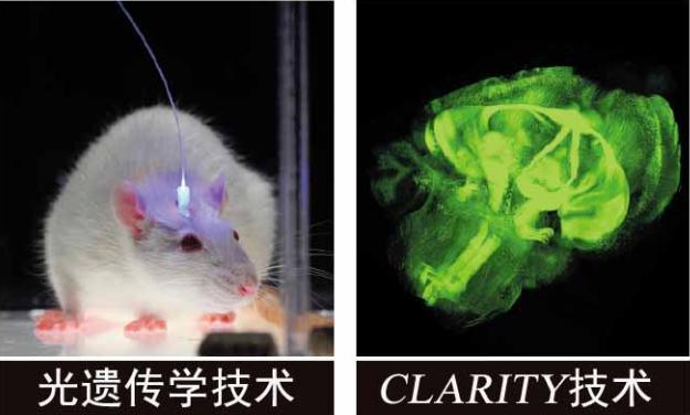 在对自闭症动物模型的研究工作中也曾经发现过类似的
