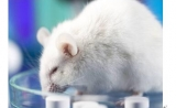 浅析新药研发中的药物安全性研究有哪些