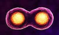 Science子刊:杜克大学华人团队发现细胞融合及胎盘发育的新机制