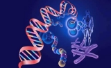 中美科学院院长在《科学》联合发文 呼吁就人类基因编辑准则达成国际共识